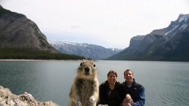 Squirrel popping in the snapshot of a vacationing American couple.