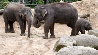 Construction of the east-west link is likely to be disruptive to Melbourne Zoo animals, particularly the elephants.