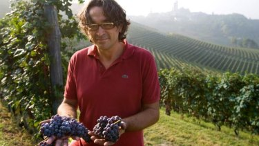 A winemaker in Serralunga d'Alba in northern Italy during a much better harvest season.
