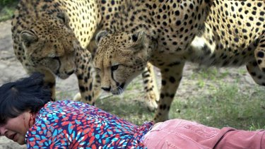 Violet has blood on her face as the cheetahs circle after the first attack.