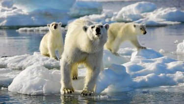 Record-low Arctic ice cover just one of the signs of climate change.,