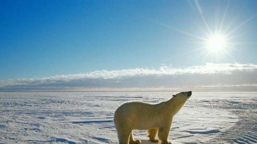 Polar bears - and much else besides - are threatened as global temperatures rise.
