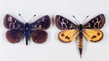 Male and female moths.