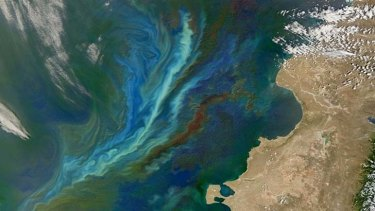 Unintended consequences: Algal bloom.