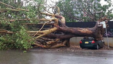 Tree collapse: a car was destroyed on Station Street.