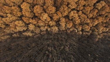 The award-winning image was taken with a remote-controlled helicam and depicts the aftermath of a raging bushfire