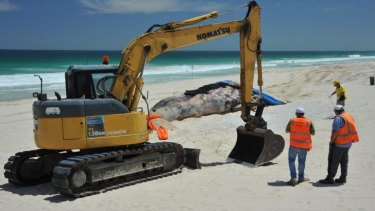 Workers survey the scene at Scarborough Beach.