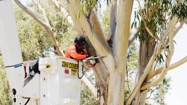 A contractor removing trees at Sydney Park to make way for the WestConnex motorway.