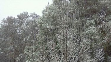 Snow at Mount Victoria in the Blue Mountains.
