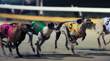 The training of greyhounds would continue for five years after racing was banned in NSW, under draft recommendations being considered by an expert taskforce.