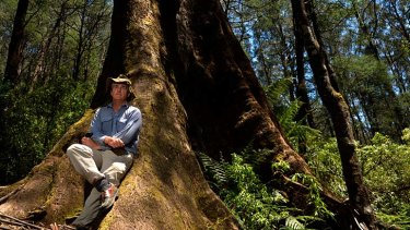 Thin on the ground: Ecologist David Lindenmayer worries about the worldwide demise of large trees and the impact on wildlife that depends on them for habitat.