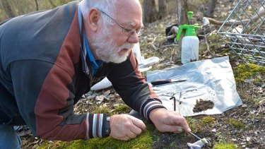 Neil Anterton takes a sample from the endangered rosella spider orchid.