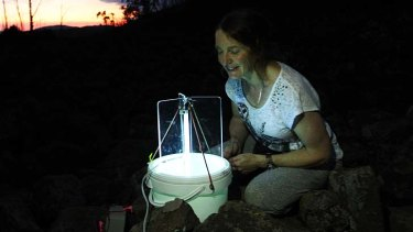 Placing traps for moths, a favourite food for the mountain pygmy possum.
