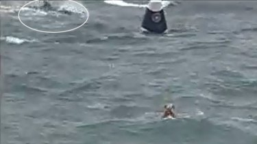 Close encounter ... competitors say a shark got too close to the race for comfort.