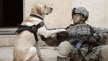 Man's best friend ... US Army Staff Sergeant Kevin Reese and his military working dog Grek in Iraq.