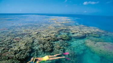 """Snorkelling on reef off <span class=""""highlight"""">Whitsunday</span> island"""