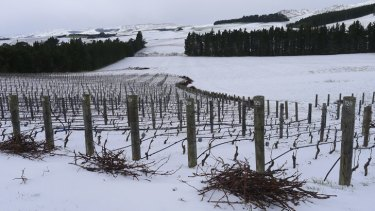 Pyramid Valley vineyard in New Zealand.