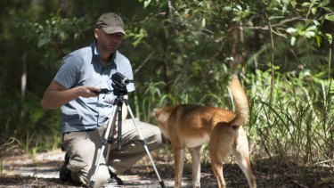 Rob Appleby taking video of dingoes on Fraser Island.