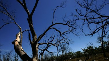 Trees start to lose leaf function and can die if exposed to prolonged excessive heat.