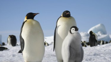 Emperor penguins are at risk from untreated human waste.