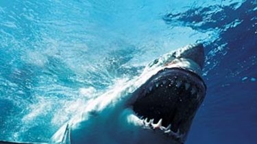 More than 860 sharks including 258 white sharks have now been tagged.