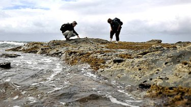 Patricia Vickers-Rich and Lesley Kool prospect for fossils near Eagles Nest, Inverloch.