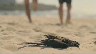 Commercial TV doesn't like dead birds.
