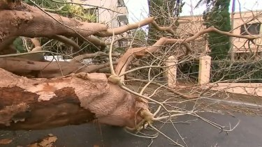 Huge swells forced ferries to halt and trees have hit the deck as gale-force winds and heavy rains lashed through Sydney today.