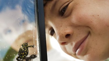 Eye to eye with an endangered Northern Corroboree frog, Ethan Laver, 8, from Sutton was one of the attendees at the recent Jerrabomberra Wetlands open day.