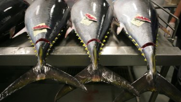 Tuna fishing; a lifeline for Pacific nations?