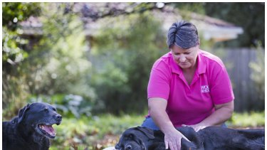 Old dogs, new life: Minda Blake's  business  provides massages to horses and dogs, including these elderly labs, Jango and Ella. Ms Blake left the military to retrain as a myofunctional therapist.