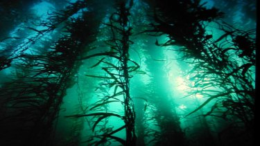 Oceans absorb some 90 per cent of carbon dioxide emissions.