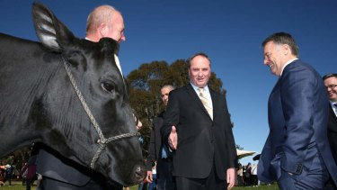 Agriculture Minister Barnaby Joyce and Shadow Agriculture Minister Joel Fitzgibbon inspect a dairy cow on Wednesday. Photo: Alex Ellinghausen