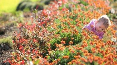 Johanna Newing enjoys bright colour flowers at the Botanical Gardens.