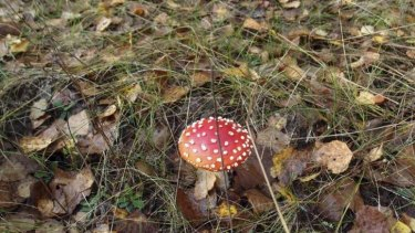 A mushroom in the forest near Novoshepelychi, an abandoned village in the Chernobyl Nuclear Power Plant exclusion zone, in Ukraine.