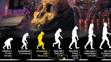 AUSTRALOPITHECUS SEDIBA: Remains of a primitive species that lived two million years ago reveal they had a mixture of ape-like and human-like features. This unique combination makes them the likely ancestor of humans.