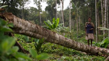 PNG log exports grew by almost 20 per cent in 2011 due mainly to logging within the leases, Greenpeace said.