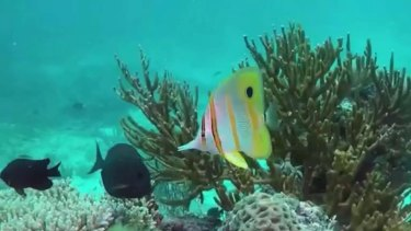 Australia deferred an attempt by the UN to downgrade the Great Barrier Reef's World Heritage status because of damage.
