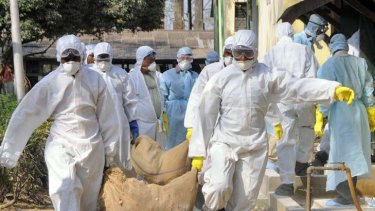 The resurgence of 'bird flu' could trigger a global pandemic.