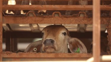 """Resumed ... """"The live export trade as currently carried out is indefensible."""""""