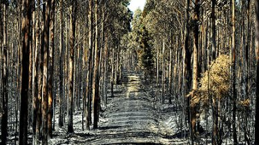 The aftermath of the Boolarra bushfires.