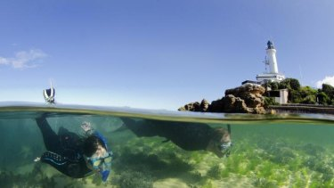 Aquatic scientist Sheree Marris snorkels at Point Lonsdale.