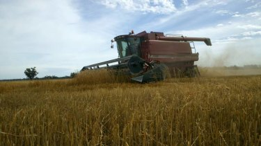 Prices for staples such as wheat have risen nearly 50 per cent on international markets since June.