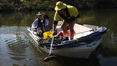 An SeqWater ranger and Somerset Regional Council employee remove dead catfish from the Brisbane River at Lowood.