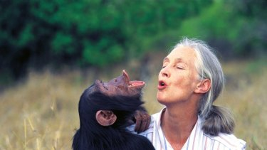 Jane Goodall in the field.