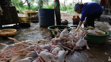 Ducks and chickens for sale at a poultry market in the outskirts of Hanoi. Vietnam is still struggling with new cases of bird flu.