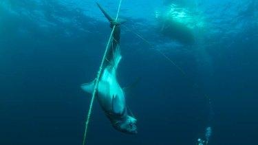 The shark was found near Avoca Beach.