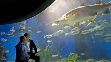 Mick Foley (left) and consultant scientist Stewart Nuttall at Melbourne Aquarium. Researchers have discovered shark antibodies that may help treat human diseases.
