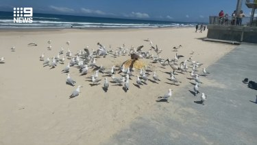 Footage shows the man's body buried in sand and his head covered in chips, triggering a seagull frenzy.