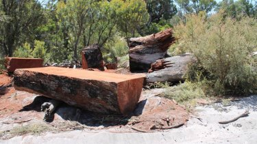 The large jarrah tree was removed from Greater Preston National Park.
